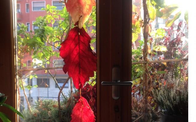 La tenda di foglie fai-da-te