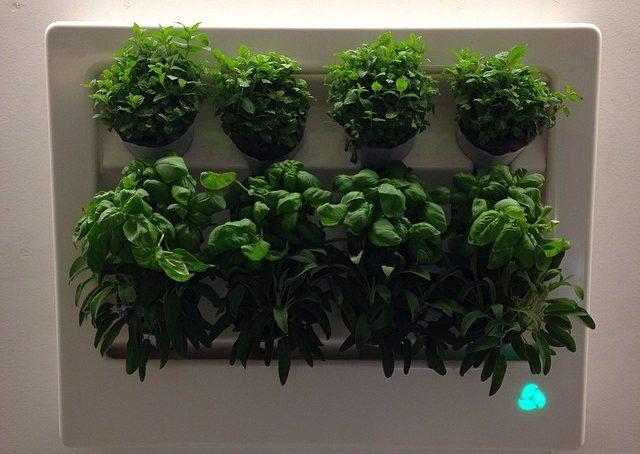 Le erbe aromatiche? Mettile in cornice! Florabox della designer polacca Halina Kaminska prodotta da Florabo #fuorisalonecf #venturalambrate  presso Polish Job