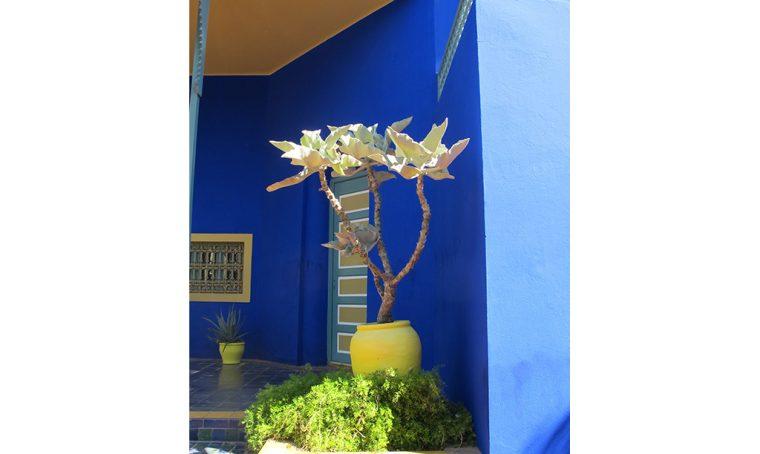 Viaggi green: magico blu di Majorelle