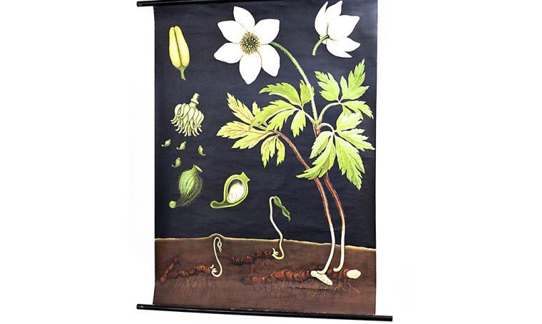 Décor con soggetti botanici