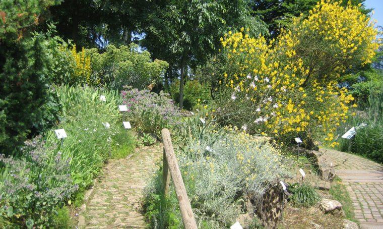 Arriva l'estate: tutti all'orto botanico!