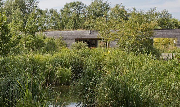 La casa ecologica: quello che dovete sapere sulla fitodepurazione