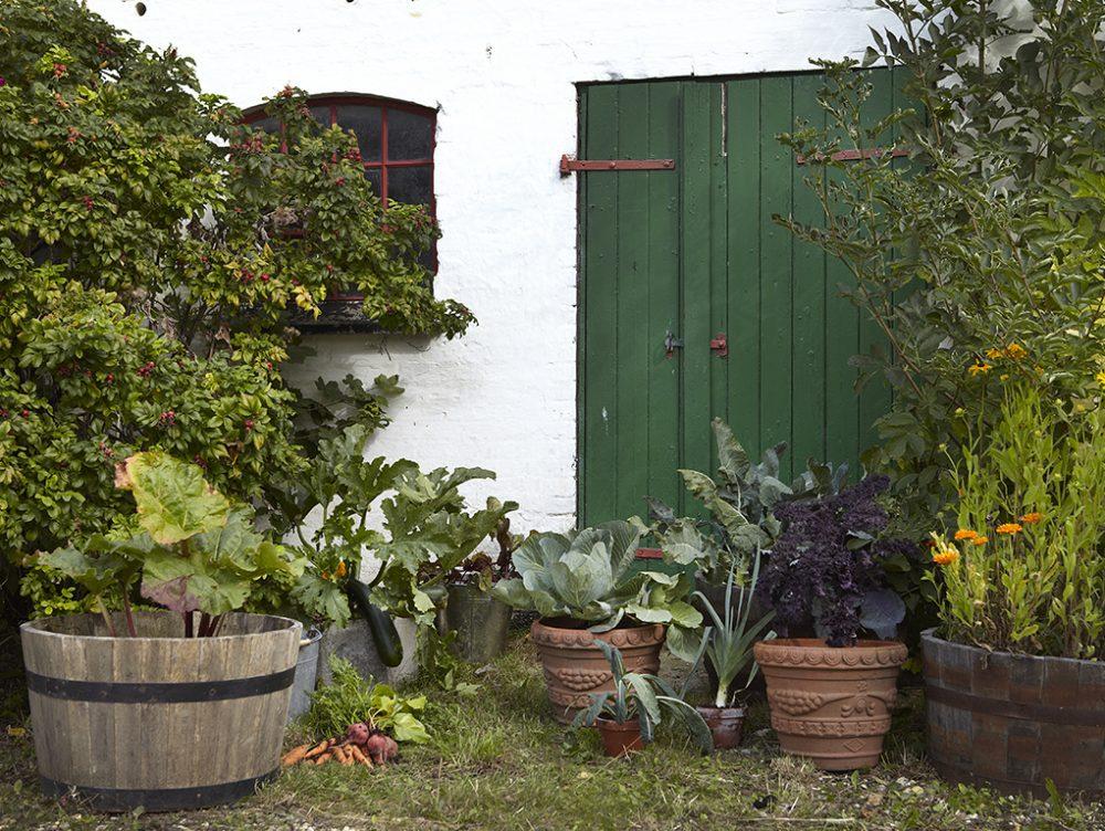 Come coltivare l'orto in balcone