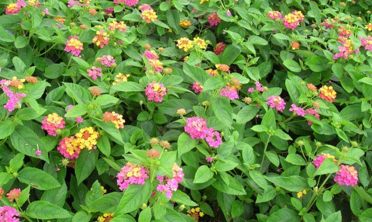 4 mosse per proteggere le piante dal caldo