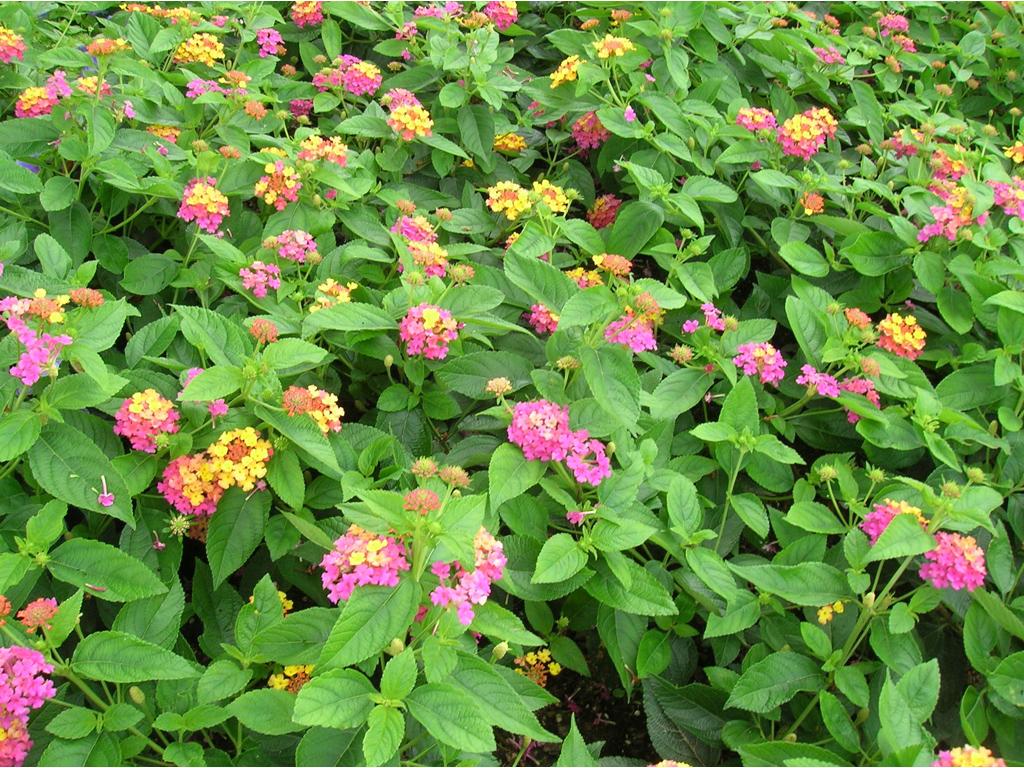 Fiori Che Amano Il Sole 4 mosse per proteggere le piante dal caldo - casafacile