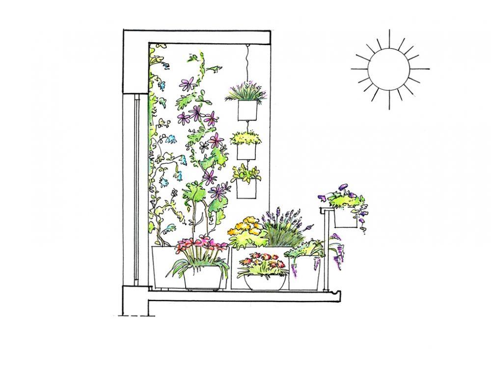 22 piante per riparare un terrazzo in pieno sole