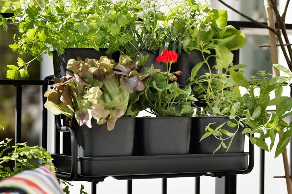 22 piante per riparare un terrazzo in pieno sole casafacile for Amazon portavasi da balcone
