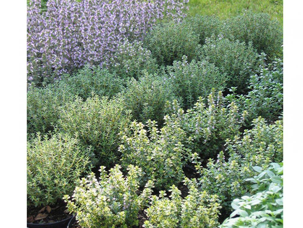 Come usare le erbe aromatiche