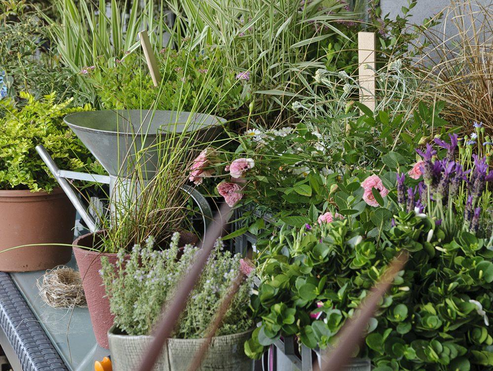 Come e quando rinvasare le piante