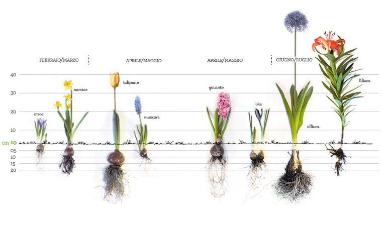 Bulbi d'autunno: come piantarli adesso per avere fiori a primavera