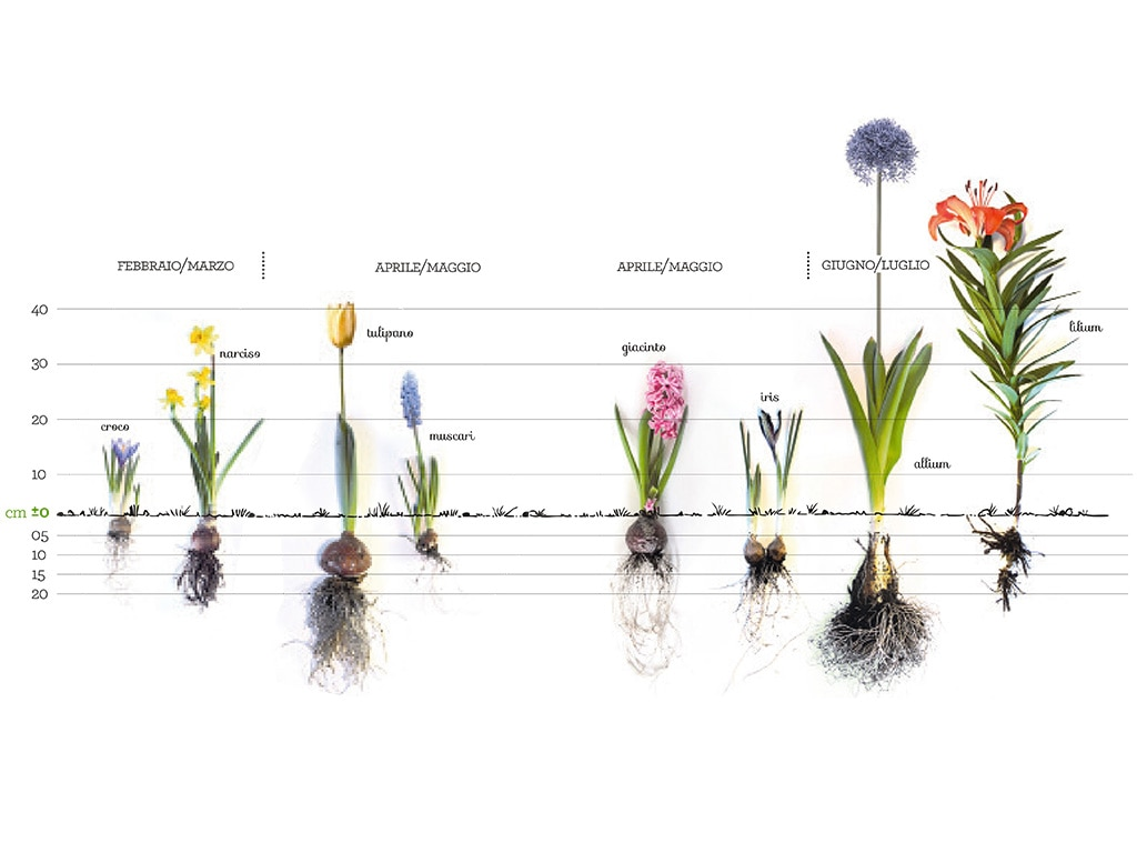 Quali Bulbi Piantare In Primavera bulbi d'autunno: come piantarli adesso per avere fiori a