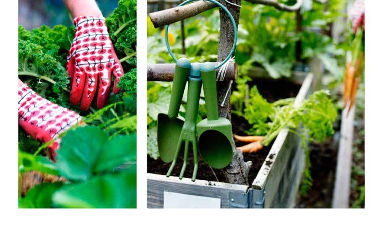 Come preparare le piante per l'inverno