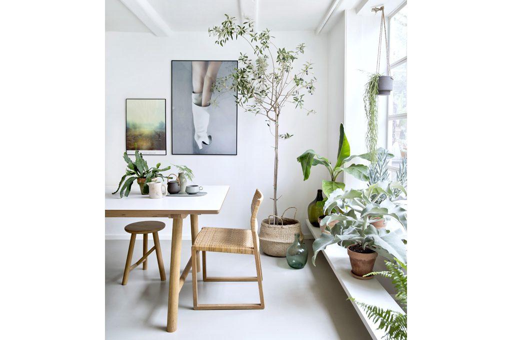 Piante da appartamento come creare un giardino d 39 inverno - Giardino interno appartamento ...