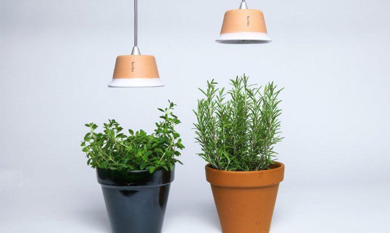 Come coltivare le piante con poca luce in casa