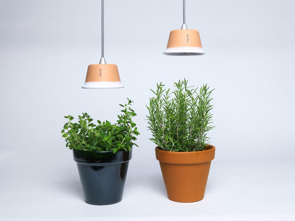 Coltivare In Casa Piante Aromatiche come coltivare le piante con poca luce in casa - casafacile