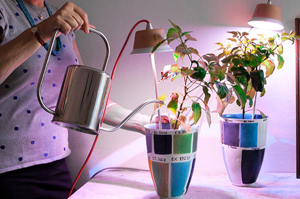 Come coltivare le piante con poca luce in casa casafacile - Piante interno poca luce ...
