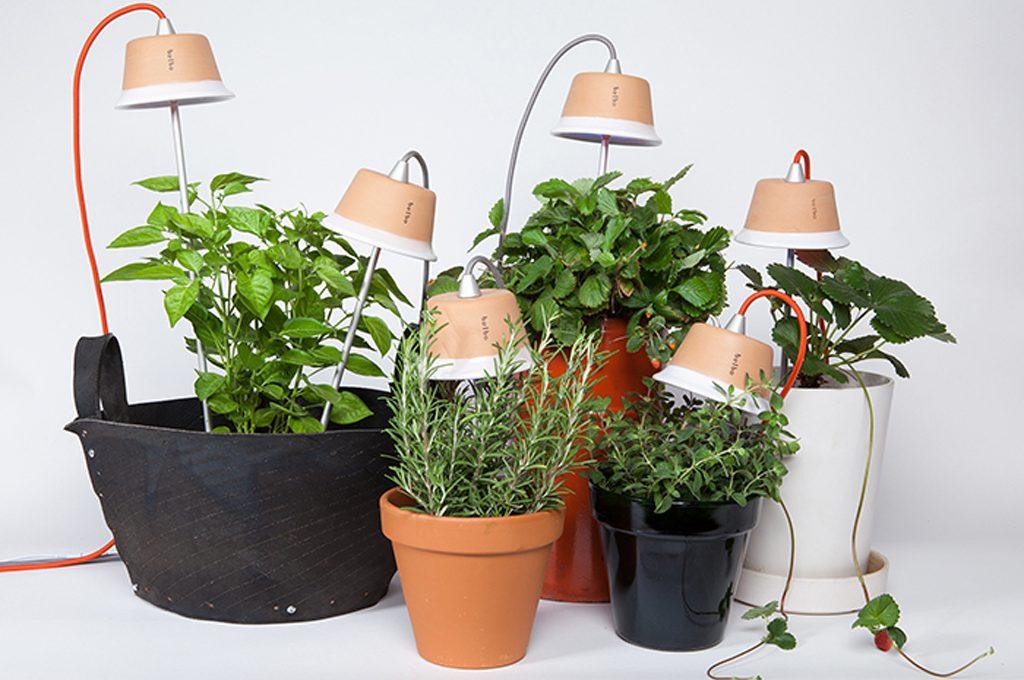 Piante Per Ufficio Poca Luce : Come coltivare le piante con poca luce in casa casafacile