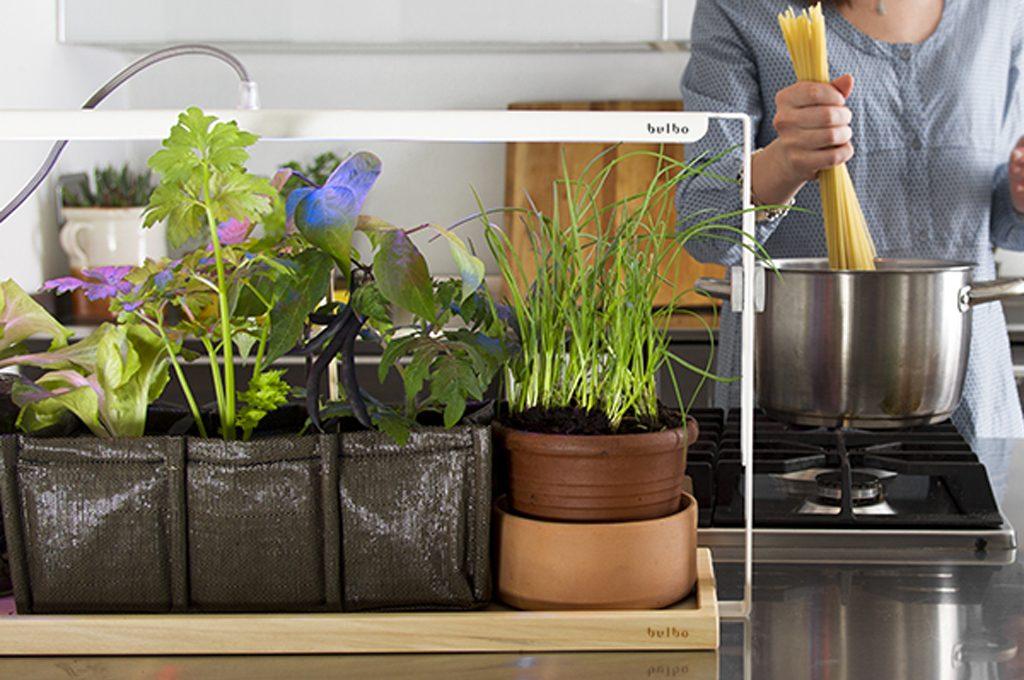 Come coltivare le piante con poca luce in casa casafacile