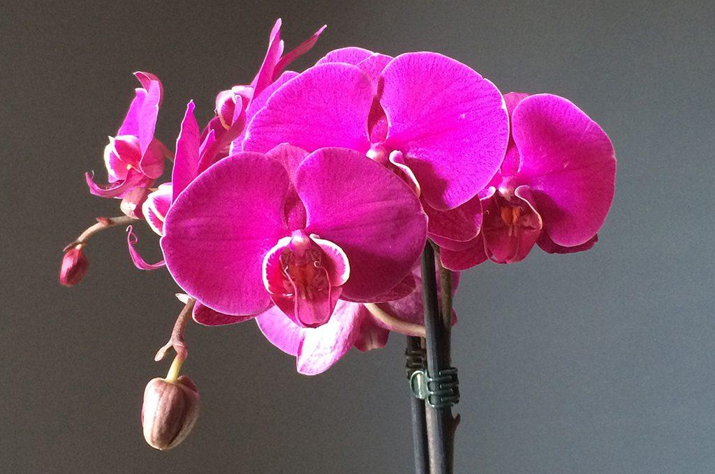 5 consigli per avere orchidee bellissime casafacile