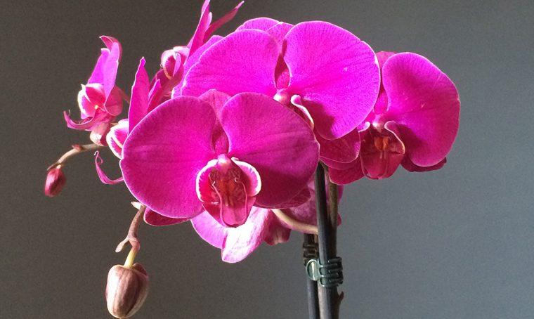 5 consigli per avere orchidee bellissime