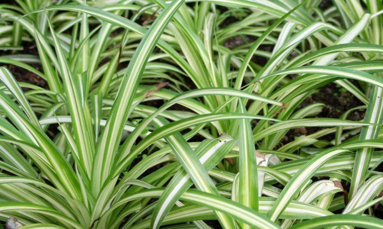 8 piante facili da appartamento