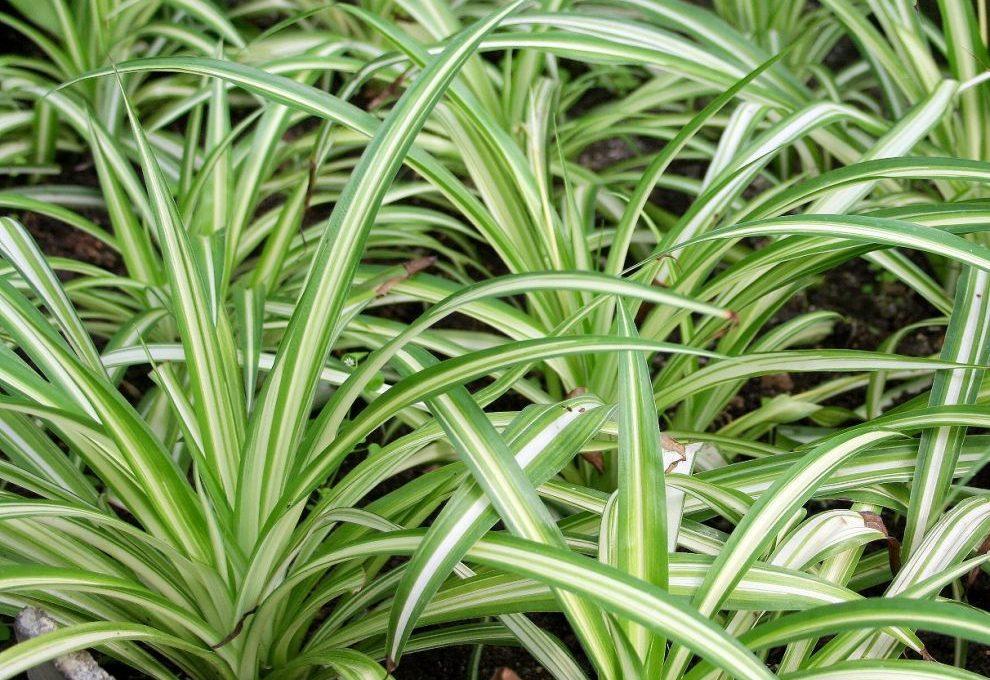 8 piante facili da appartamento casafacile for Piante da cespuglio