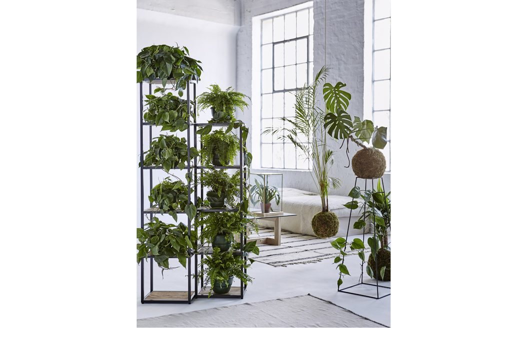 Scaffali e pannelli nuovi spazi per le piante in casa - Le piante grasse si possono tenere in casa ...