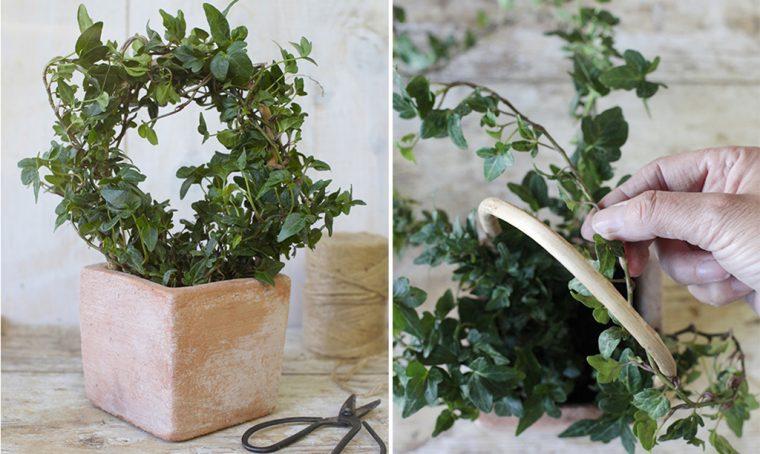 Come dare forma alle piante
