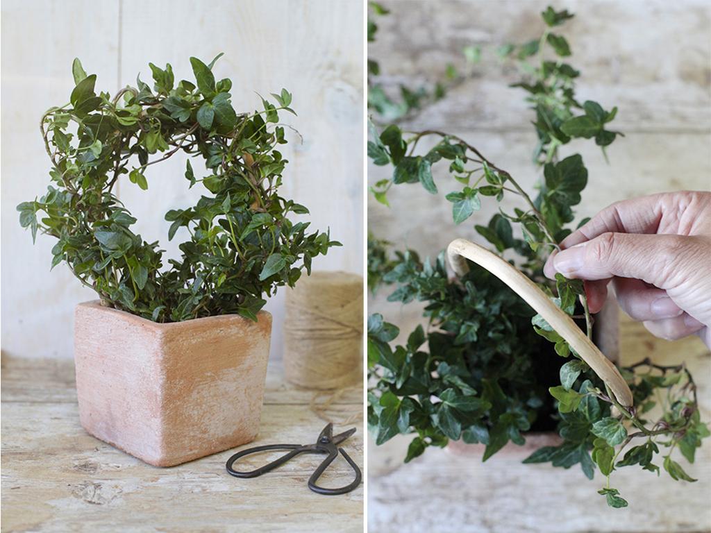 Tutori Per Rose Rampicanti come dare forma alle piante - casafacile