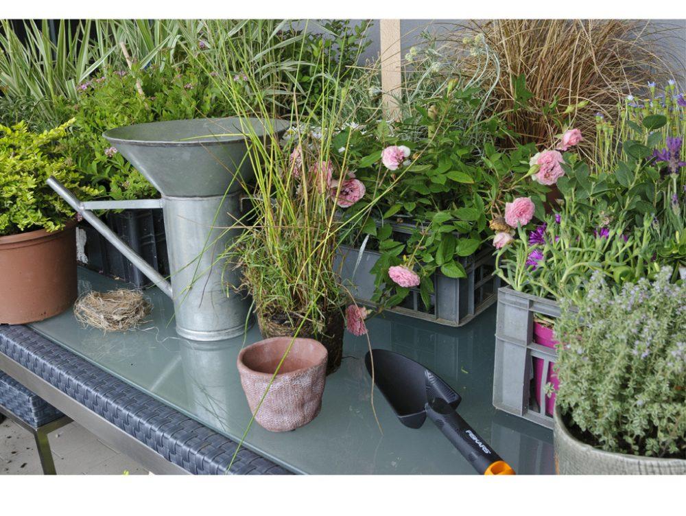 Scopri quando e come fertilizzare le piante
