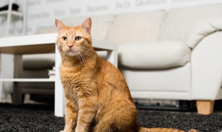 Come organizzare la casa a misura di gatto