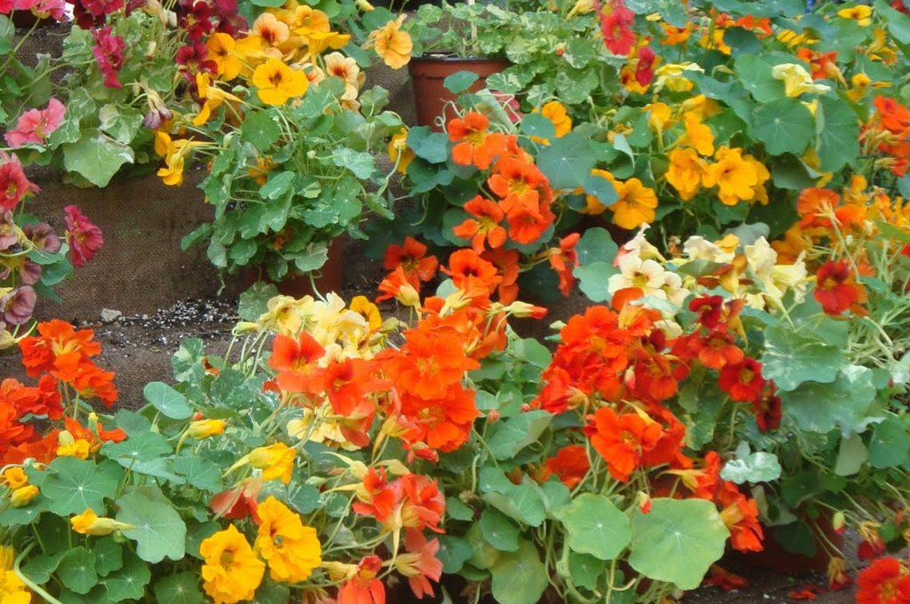 Esposizione a nord quali piante usare casafacile for Piante da giardino mezz ombra