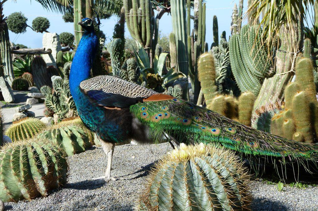 Piante grasse tour nei giardini esotici casafacile for Piante e giardini