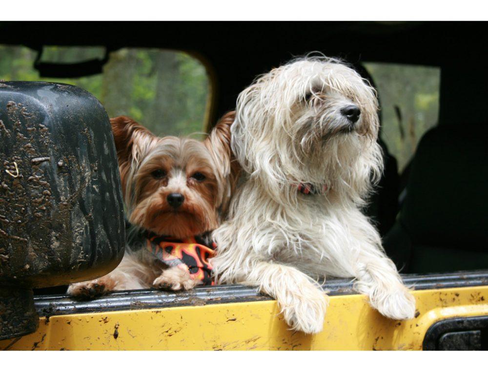 Animali in viaggio: consigli utili