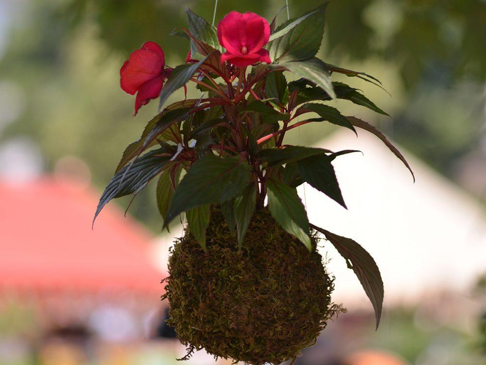 5 siti dove comprare fiori e piante online casafacile for Comprare bonsai online
