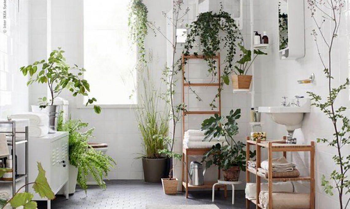 Piante da appartamento perfette anche in bagno casafacile for Piante appartamento design
