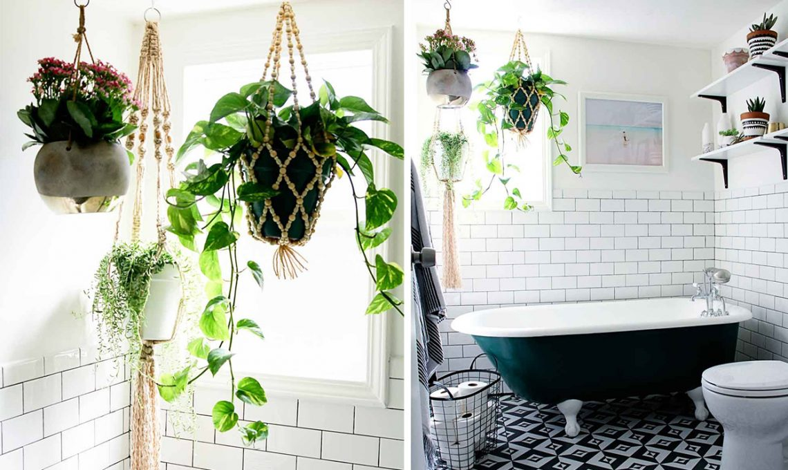 Piante da appartamento perfette anche in bagno - CASAfacile