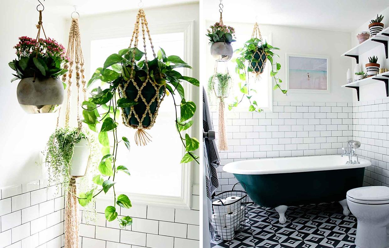 Piante da appartamento perfette anche in bagno casafacile - Piante rampicanti da interno ...