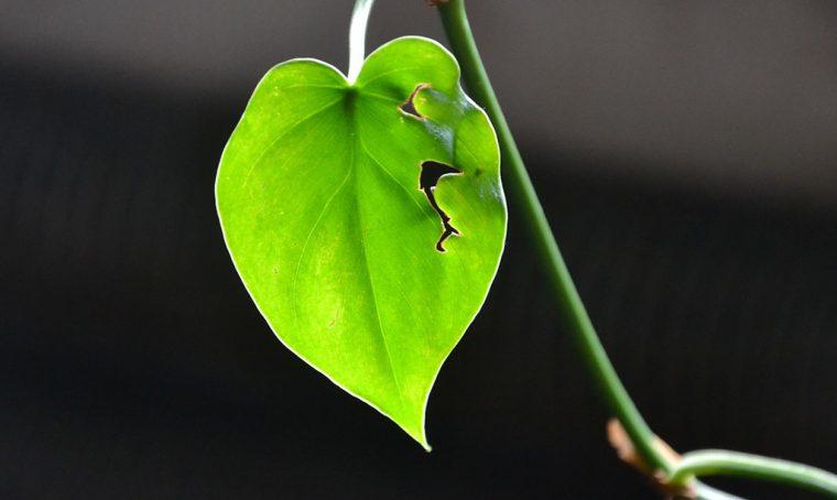 Come rianimare le piante quando fa troppo caldo