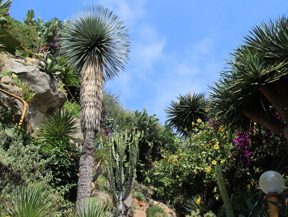 Il Giardino esotico Pallanca di Bordighera