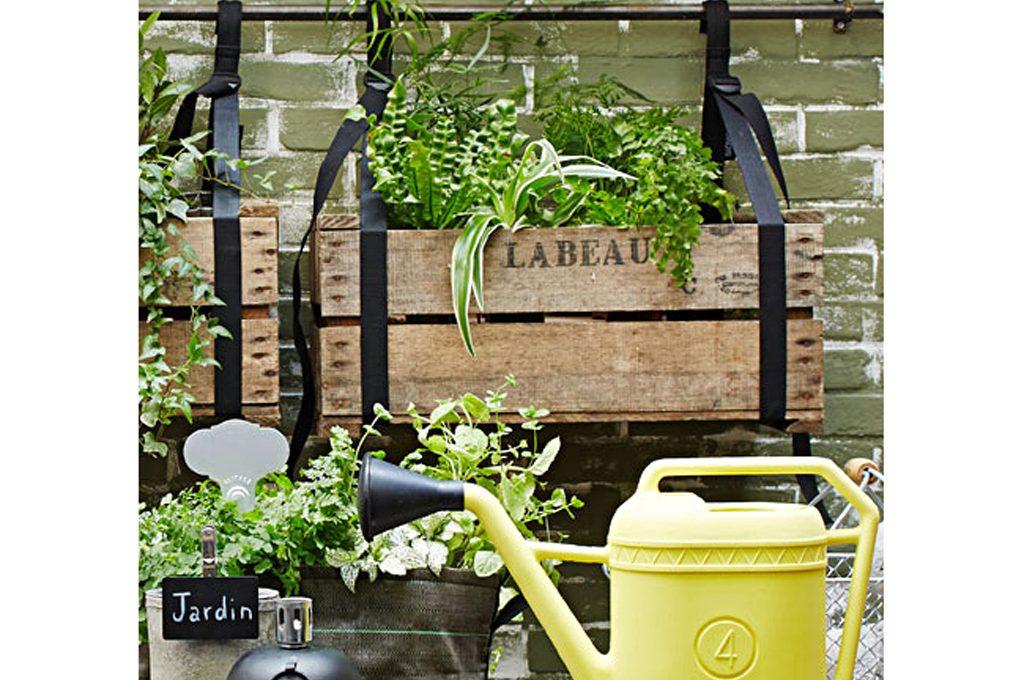 Quali piante mettere su un terrazzo esposto a est - CASAfacile