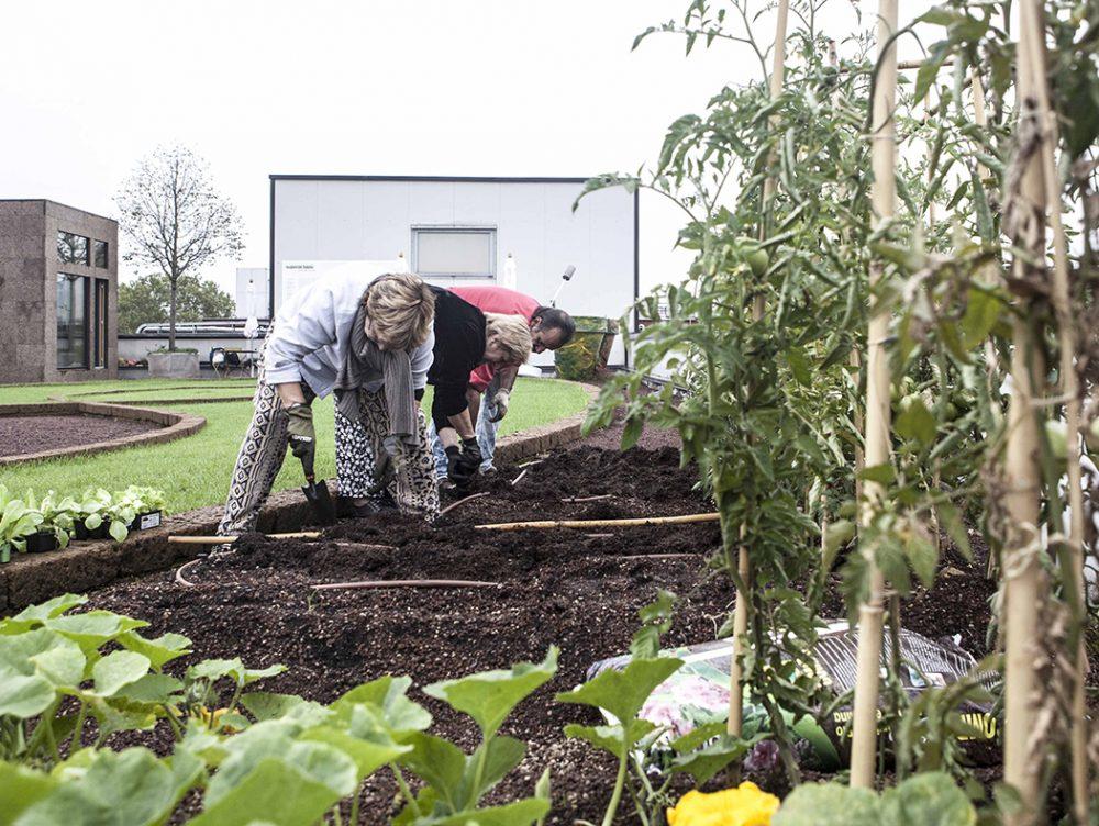Coltivare l'orto sul tetto: oggi si fa!