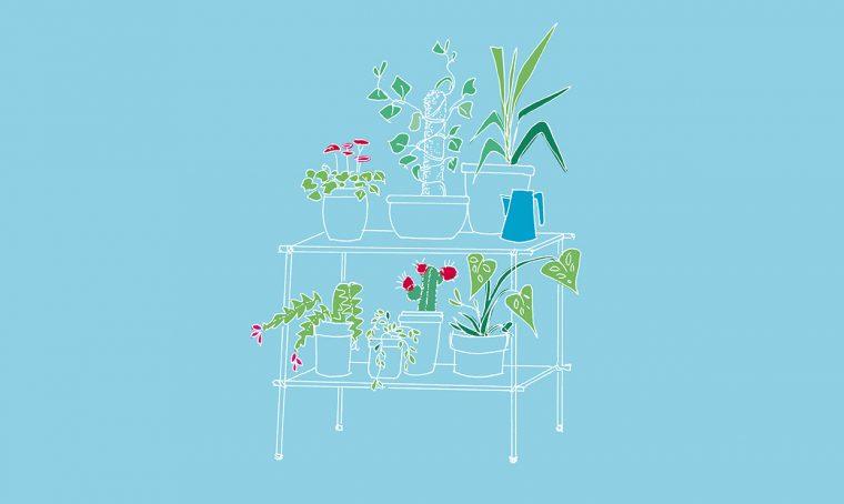 Come innaffiare le piante quando sei in vacanza