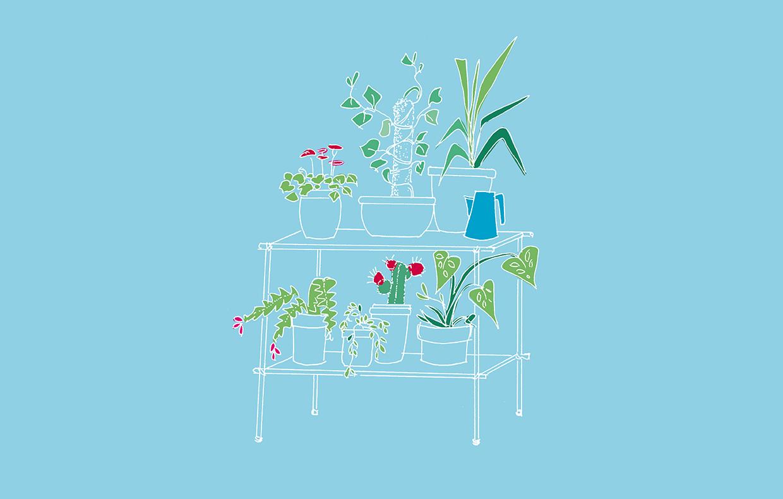 Bagnare Piante Con Bottiglie come innaffiare le piante quando sei in vacanza - casafacile