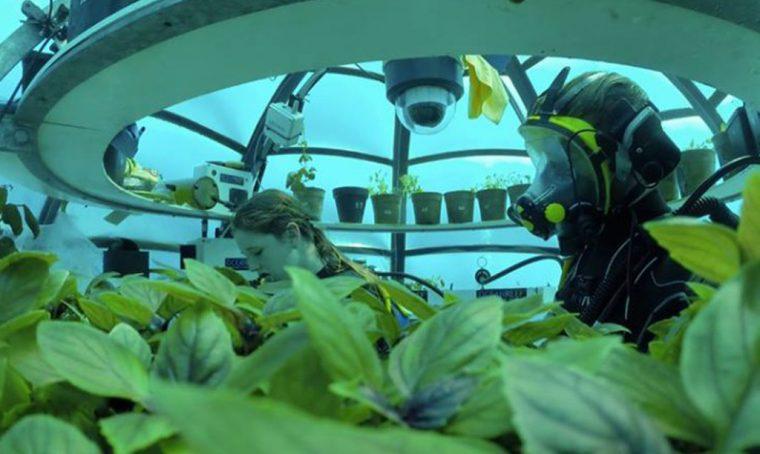 Il basilico cresce… in fondo al mare!