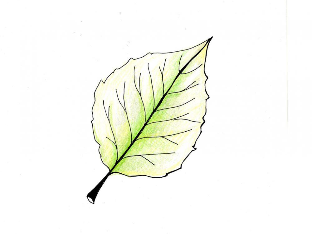 Osserva le foglie e scopri come sta la pianta