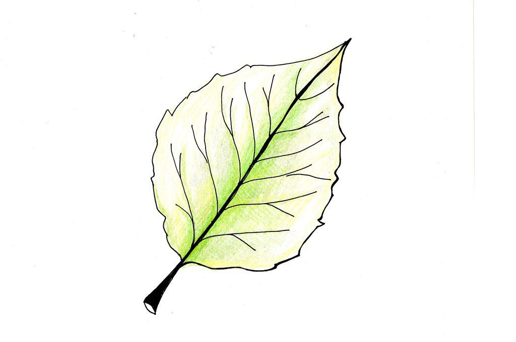 Osserva le foglie e scopri come sta la pianta CasaFacile