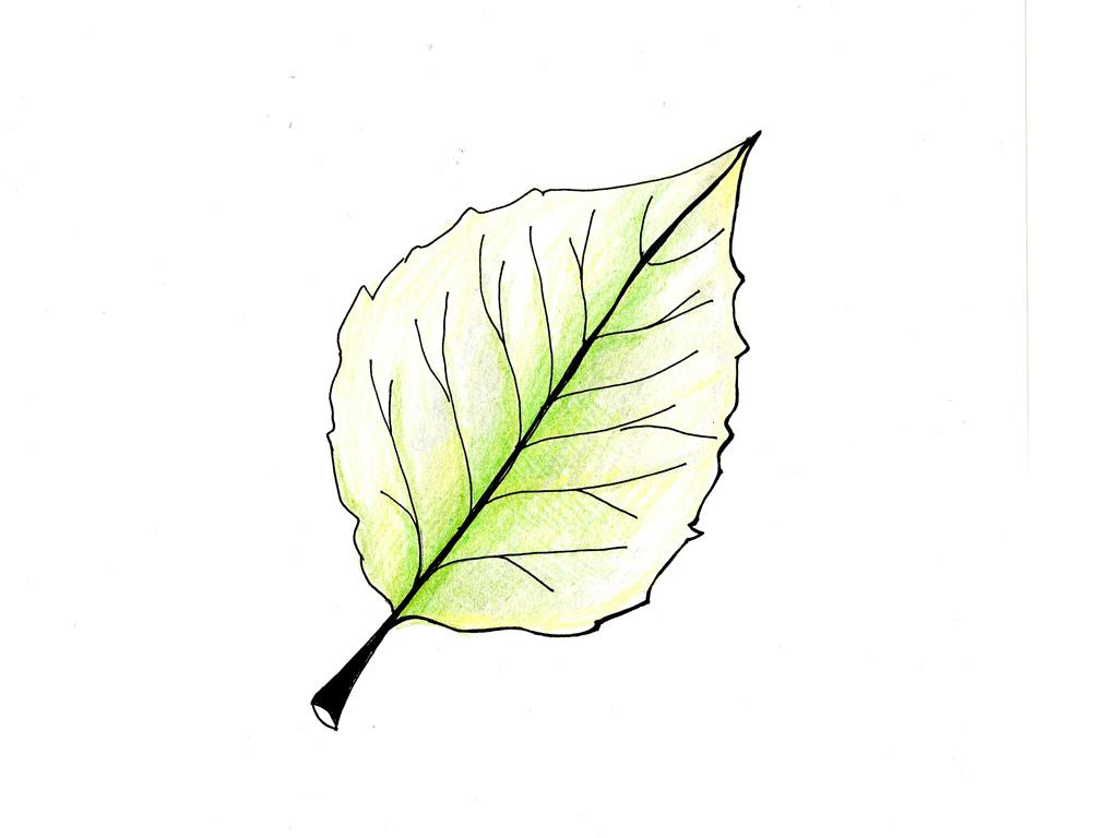 Rosa Secca Cosa Fare osserva le foglie e scopri come sta la pianta - casafacile