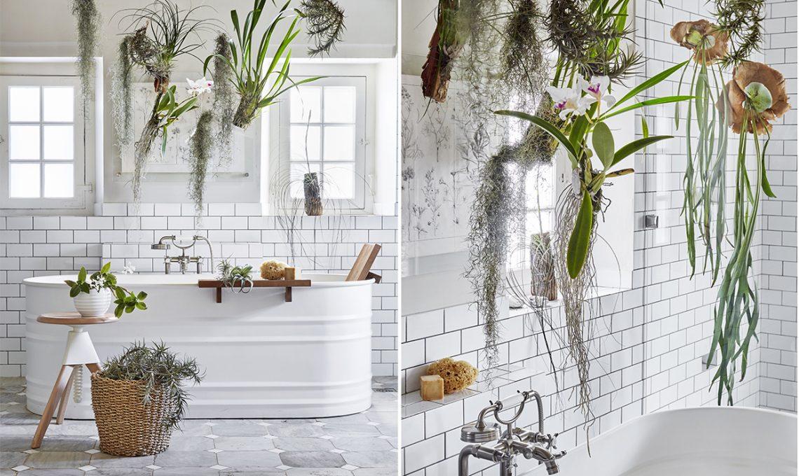 Piante Da Appartamento Per Bagno.Le Piante Da Mettere In Bagno Tillandsie E Orchidee Casafacile