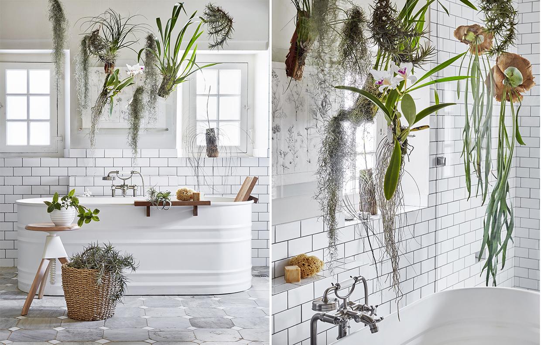 Le piante da mettere in bagno tillandsie e orchidee - Piante da bagno ...